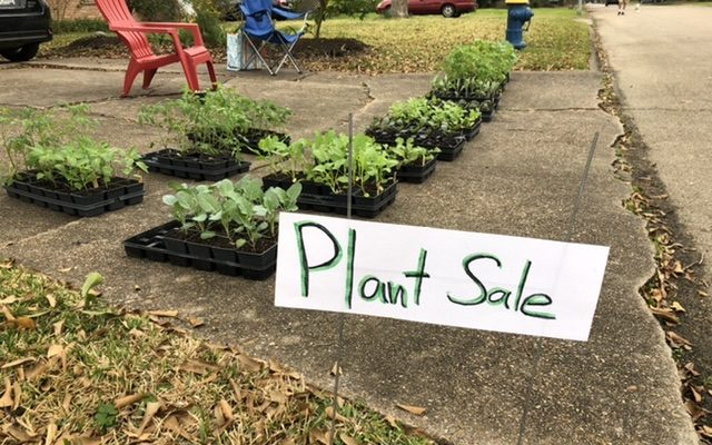 Special : Meyerland | Tomatoes | Winter Vegetables | Saturday Jan 30th