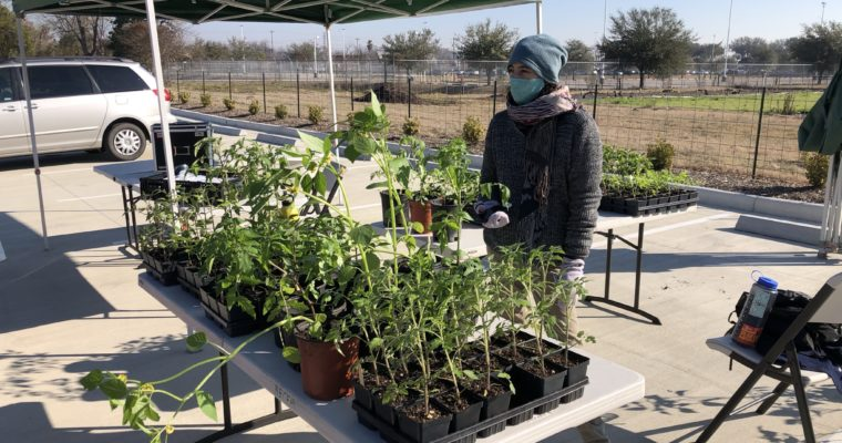 LBJ Farmers Market Plant Sale | Saturday Mar 20th